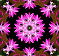 Pink Flower Kaleidoscope