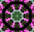 Pink Flower Kaleidoscope