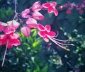 Fuchsia magenta bright flowers with long stamens Royalty Free Stock Photo