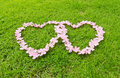 Pink flower love heart Royalty Free Stock Photos