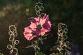 Pink Flower Wiht Blurred Backg...