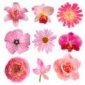 Ružový kvety