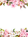 Pink flowers - apple, cherry blossom. Floral frame for postcard. Watercolor Royalty Free Stock Photo