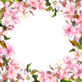Pink flowers - apple, cherry blossom. Floral frame. Watercolour Royalty Free Stock Photo