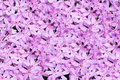 Pink flowers background Stock Photo