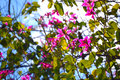 Pink flowers blooming tree blossom background Stock Photography