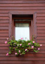 Pink Flowers In Brown Window