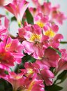 Pink flowers bunch of on light background Royalty Free Stock Image