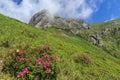 Pink Flowers In Ciucas Mountai...