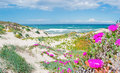 Pink flowers and clouds in platamona beach on a spring day Royalty Free Stock Image
