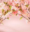 Pink flowers decorating the flat fragrant Stock Image
