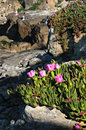 Pink Flowers and Fishermen on Ocean Cliffs