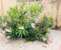 Pink flowers in garden