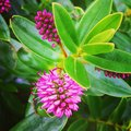 Pink flowers green nature photography Royalty Free Stock Photos