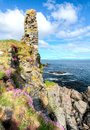 Pink flowers grow on large sea cliffs in Scotland
