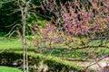 Familia plantas rosa flores en árbol