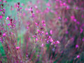 Pink flowers in the natural environment Royalty Free Stock Photos