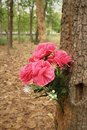 Pink flowers in nature at the forest Stock Photo