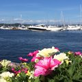 Pink flowers by the sea blue water in morning with romantic beautiful in marina Royalty Free Stock Photos