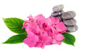Pink flowers spa stones on white Royalty Free Stock Photo