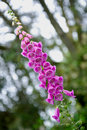 Pink flowers on stem Stock Image