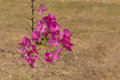 Pink flowers in sunny day and sandy background Royalty Free Stock Image