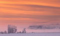 Pink fog in winter morning Royalty Free Stock Photo