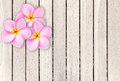 Pink frangipani flower on grey wooden plank background Royalty Free Stock Photo