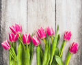 Pink fresh tulips flowers on gray wooden background spring Stock Image