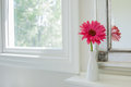 Pink gerbera daisy in a bathroom vase on shelf the window Royalty Free Stock Photography