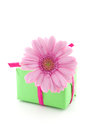 Pink gerbera flower on a present one small Stock Images