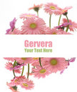 Pink gerbera frame Stock Photos