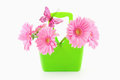 Pink gerbera s in a green basket with a butterfly on it Royalty Free Stock Photo
