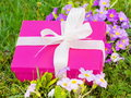 Pink gift box in the meadow Royalty Free Stock Photos