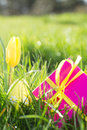 Pink gift box yellow easter egg tulip grass sunshine Stock Photography