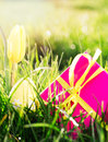 Pink gift box yellow easter egg yellow tulip sunshine grass Royalty Free Stock Image