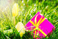 Pink gift easter egg yellow tulip grass sunshine Stock Image