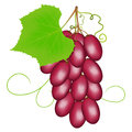 Pink grapes on a white background.