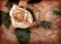 Pink grungy rose Royalty Free Stock Image