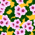 Pink Hibiscus syriacus - Rose of Sharon on Yellow Background. Vector Illustration Royalty Free Stock Photo