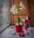 Pink hippeastrum next to a burning candle eve advent on o the window with frosty patterns Stock Photography