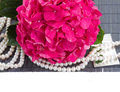 Pink hortensia flowers and pearls border on white background Stock Image