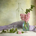 Pink hyacinth still life with Stock Photos