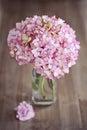Pink hydrangea flowers Royalty Free Stock Photo
