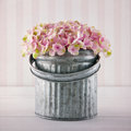 Pink hydrangea flowers in a metal bucket on vintage striped background Stock Photos