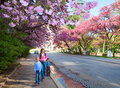 Pink  japanese cherry blossom and happy family Stock Images