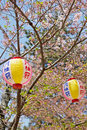 Pink japanese lanterns in sukura festival at maruyama park kyoto japan Royalty Free Stock Photo