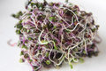 Pink kale sprouts