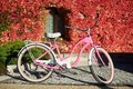 Pink lady bicycle on sunny pavement on background of house wall overgrown with bright red ivy. Royalty Free Stock Photo