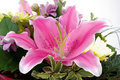 Pink lily in a bouquet with white background Royalty Free Stock Photos